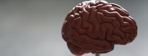 Choline hersenen