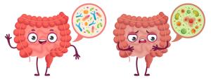 Gezonde darmbacterien
